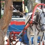 At Arabası