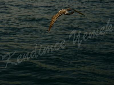 Uçsam Diyorum Özgürlüğe